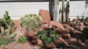 giardino con cactus e pietre rosse